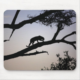 Leopard silhouette in a tree, Kenya Mouse Mat