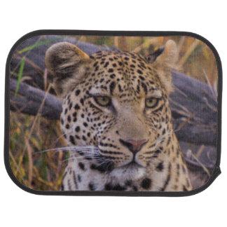 Leopard sitting, Botswana, Africa Car Mat