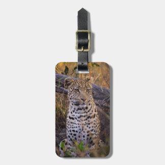 Leopard sitting, Botswana, Africa Luggage Tag