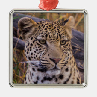 Leopard sitting, Botswana, Africa Silver-Colored Square Decoration