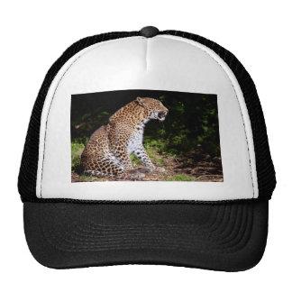 Leopard sitting mesh hat