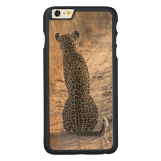 Leopard sitting in road, Africa Carved® Maple iPhone 6 Plus Case