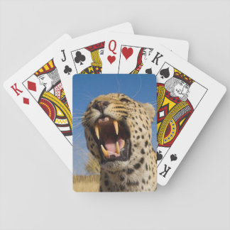 Leopard Snarling Playing Cards