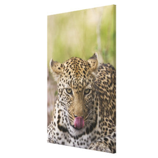 Leopard Stretched Canvas Print
