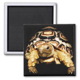 Leopard Tortoise Square Magnet