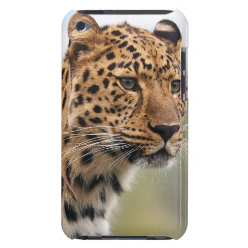 Leopard Wild Cats Case-Mate iPod Touch Case