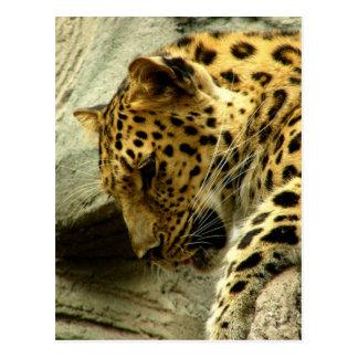 Leopard - WOWCOCO Postcard