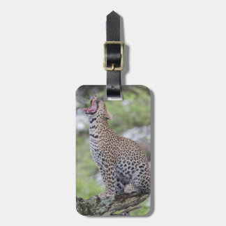 Leopard yawning, South Africa Luggage Tag