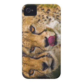 Leopards BlackBerry Bold Case