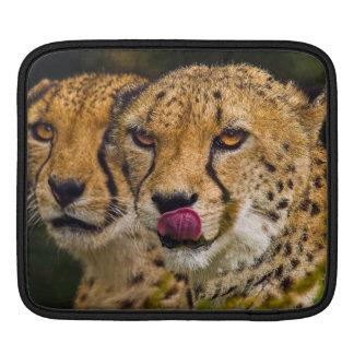 Leopards iPad 2 Sleeve