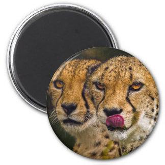 Leopards Magnet