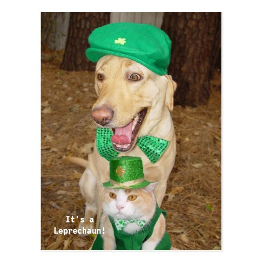 Leprechaun Sighting! Post Card