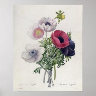 'Les Choix des Plus Belles Fleurs' Print