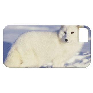 Les Etats-Unis, Alaska. Renard arctique dans le ma Barely There iPhone 5 Case