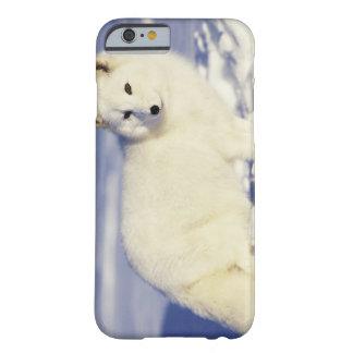 Les Etats-Unis, Alaska. Renard arctique dans le ma Barely There iPhone 6 Case