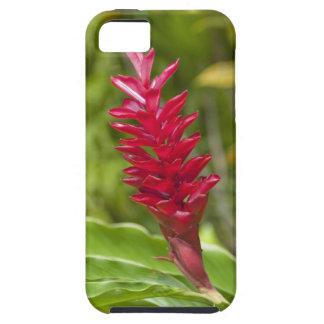 Les Fidji, île de Viti Levu. Fleur Case For The iPhone 5