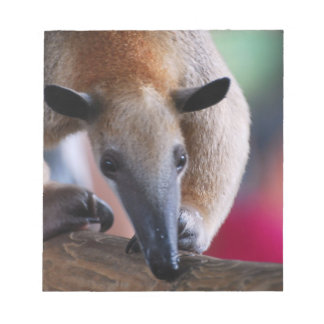 Lesser Anteater Notepad