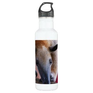 Lesser Anteater 710 Ml Water Bottle