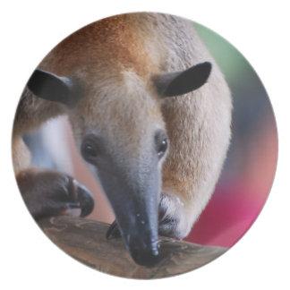 Lesser Anteater Plate