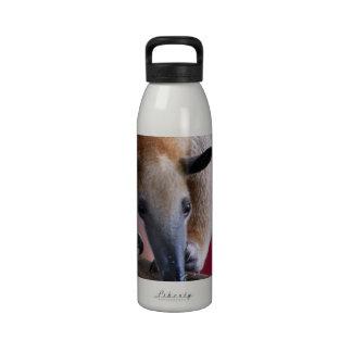 Lesser Anteater Water Bottle