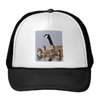 Lesser Canada Goose Brood Hat