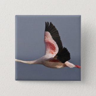 Lesser Flamingo at Lake Nakuru NP, Kenya. 15 Cm Square Badge
