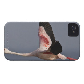 Lesser Flamingo at Lake Nakuru NP, Kenya. Case-Mate iPhone 4 Cases