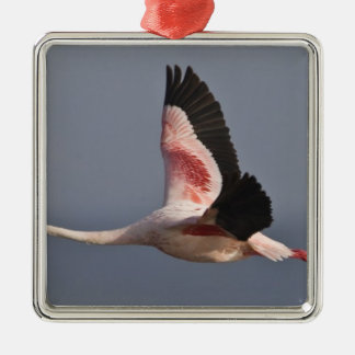 Lesser Flamingo at Lake Nakuru NP, Kenya. Christmas Ornament