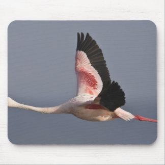 Lesser Flamingo at Lake Nakuru NP, Kenya. Mouse Mat