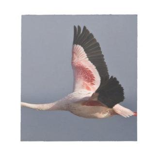 Lesser Flamingo at Lake Nakuru NP, Kenya. Notepad