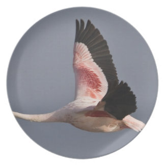 Lesser Flamingo at Lake Nakuru NP, Kenya. Party Plate