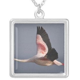 Lesser Flamingo at Lake Nakuru NP, Kenya. Silver Plated Necklace