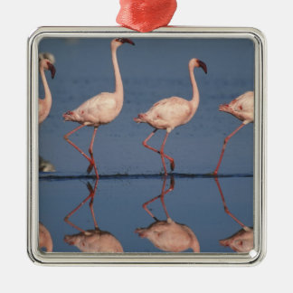Lesser Flamingo, (Phoenicopterus minor), Christmas Ornament