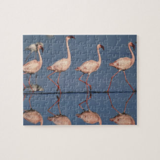 Lesser Flamingo, (Phoenicopterus minor), Jigsaw Puzzle
