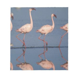 Lesser Flamingo, (Phoenicopterus minor), Notepad