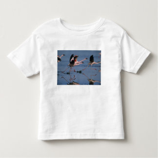 Lesser Flamingo, (Phoenicopterus minor), taking Toddler T-Shirt