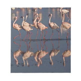 Lesser Flamingos displaying, Lake Nakuru Notepad