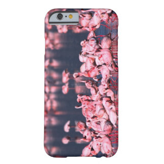 Lesser Flamingos (Phoeniconaias minor), Africa, Barely There iPhone 6 Case