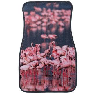Lesser Flamingos (Phoeniconaias minor), Africa, Car Mat