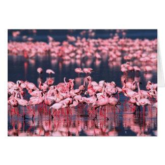 Lesser Flamingos (Phoeniconaias minor), Africa, Card