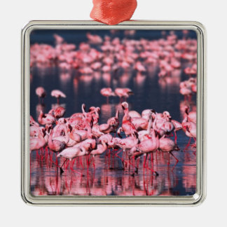 Lesser Flamingos (Phoeniconaias minor), Africa, Christmas Ornament