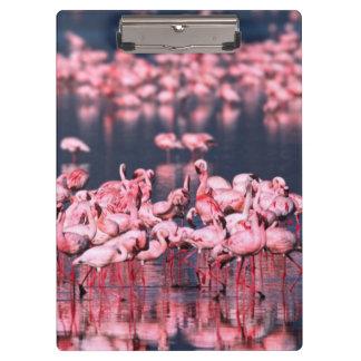 Lesser Flamingos (Phoeniconaias minor), Africa, Clipboard