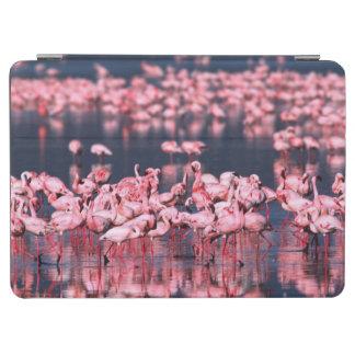 Lesser Flamingos (Phoeniconaias minor), Africa, iPad Air Cover