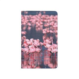 Lesser Flamingos (Phoeniconaias minor), Africa, Journal