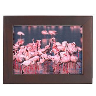 Lesser Flamingos (Phoeniconaias minor), Africa, Keepsake Box