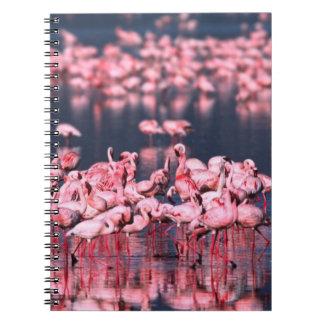 Lesser Flamingos (Phoeniconaias minor), Africa, Notebook