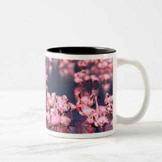 Lesser Flamingos (Phoeniconaias minor), Africa, Two-Tone Coffee Mug