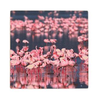 Lesser Flamingos (Phoeniconaias minor), Africa, Wood Coaster