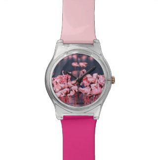 Lesser Flamingos (Phoeniconaias minor), Africa, Wristwatches