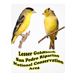 Lesser Goldfinches Flyers